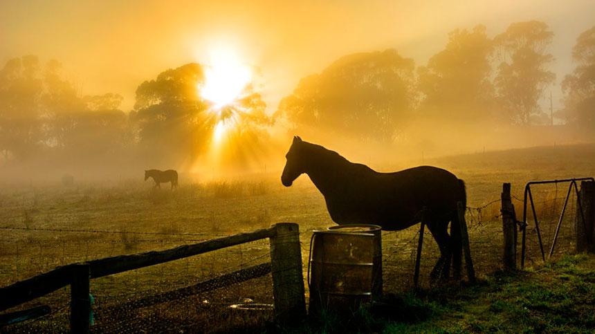 Como devo cuidar de meu cavalo a pasto?