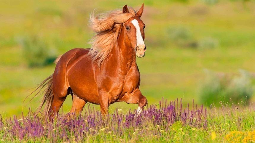 O que são os Oligoelementos? Qual a consequência de sua ausência para os equinos?