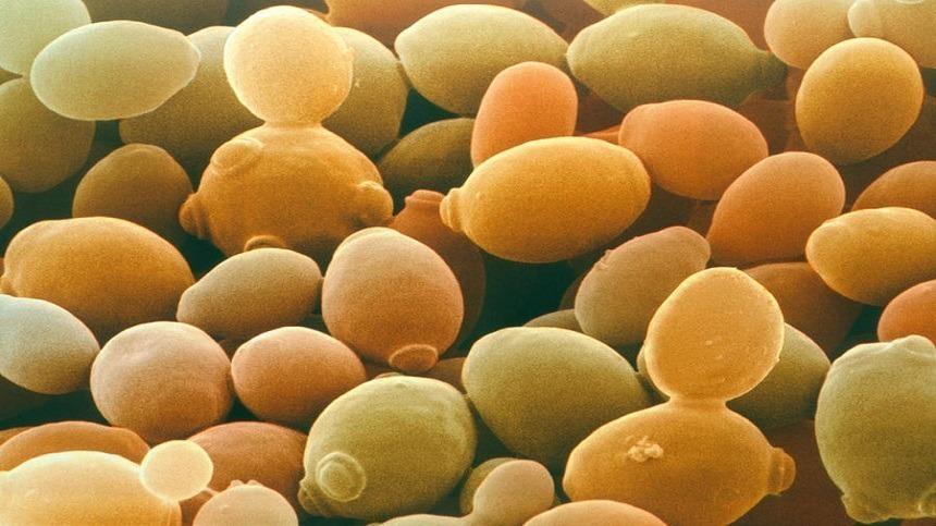 O que são Probióticos