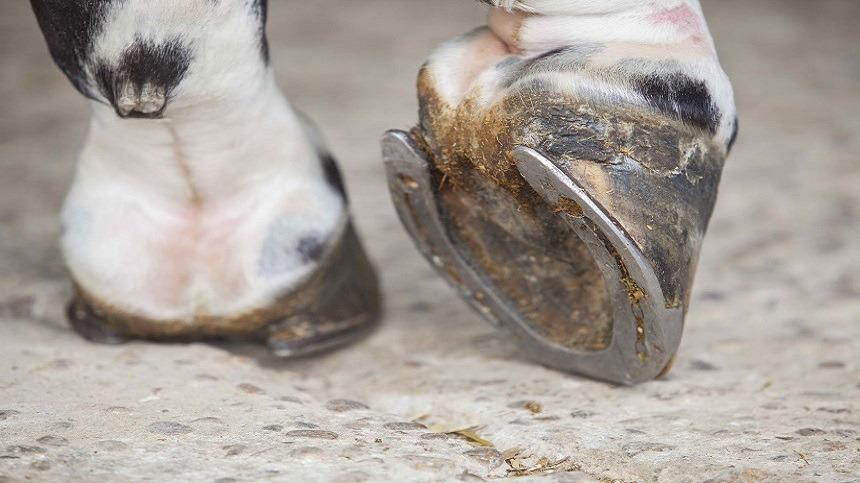 Saiba como fazer a manutenção ideal dos cascos do seu animal