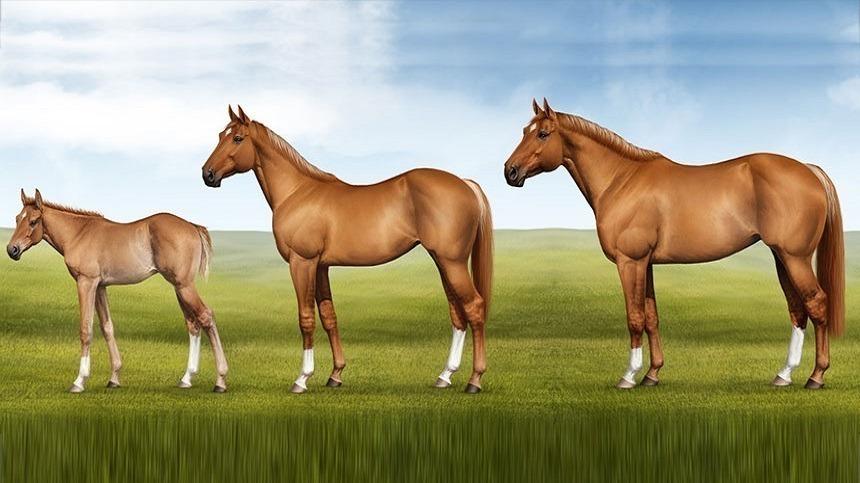 Saiba como fazer seu cavalo crescer 3 cm em 2 meses