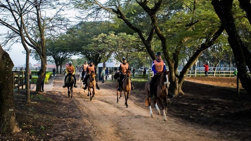Saiba como fazer seu cavalo ganhar mais resistência para o esporte