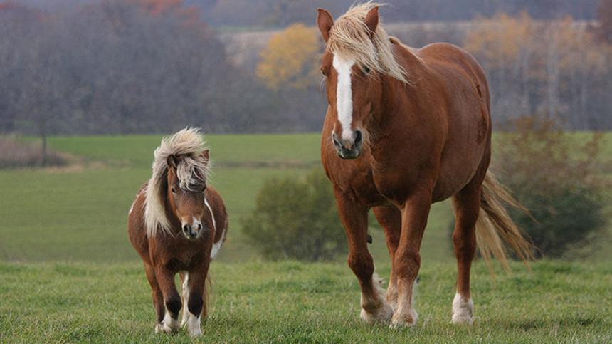 Saiba mais sobre vermifugação para equinos.