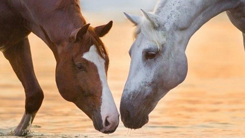 Saiba o que pode melhorar a imunidade do seu cavalo