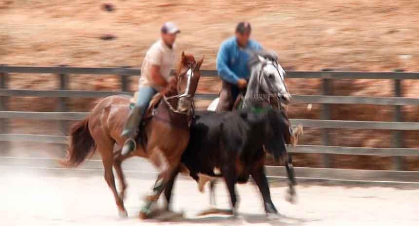 Suplementos para cavalos de vaquejada